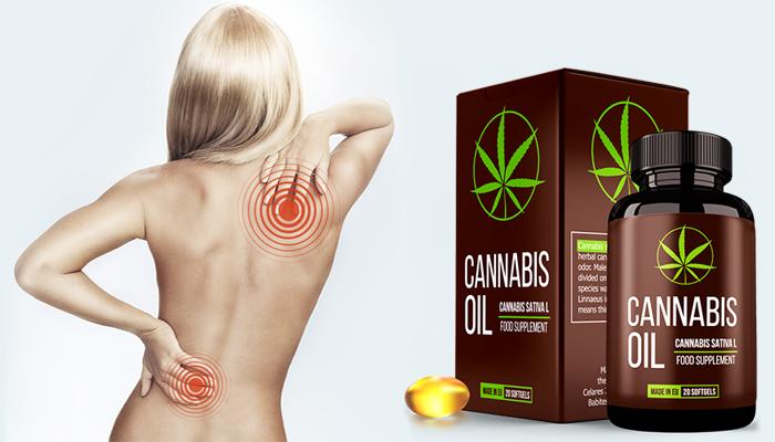 Cannabis Oil: regenera a cartilagem e as articulações